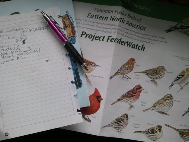 project feederwatch