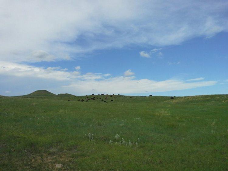 bison buster