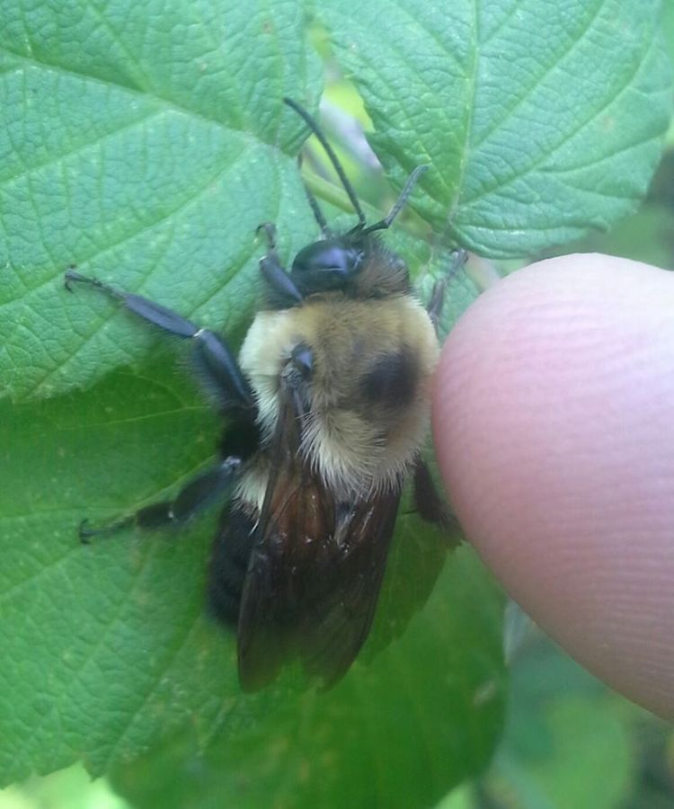 petting a bee