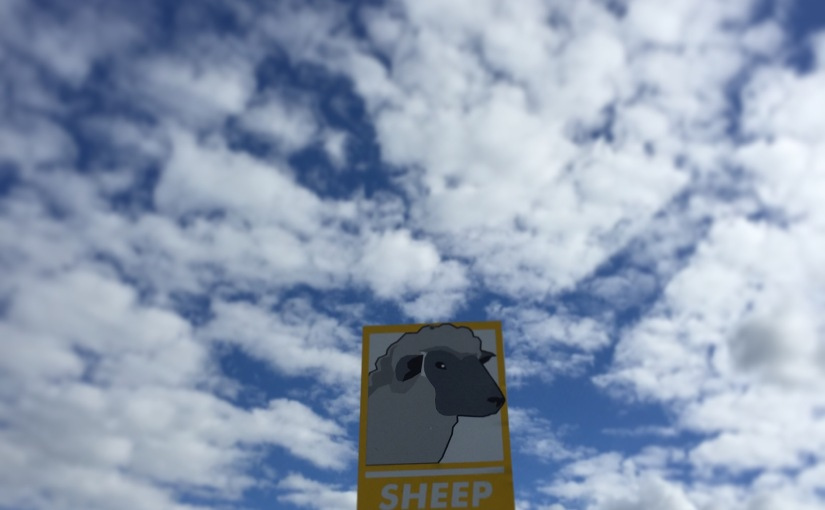 WI Sheep & Wool 2015 Recap