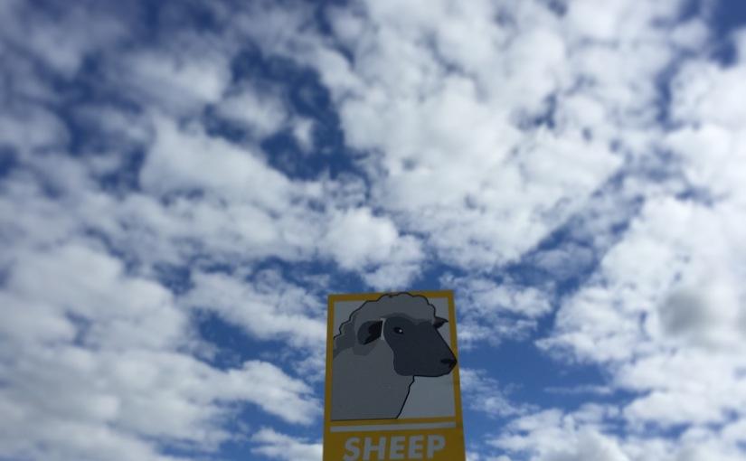 WI Sheep & Wool 2015Recap