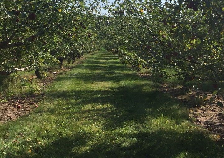 Apple Pickings, A Rusty Meat Hook, and The Many Things You Can Do WithYarn